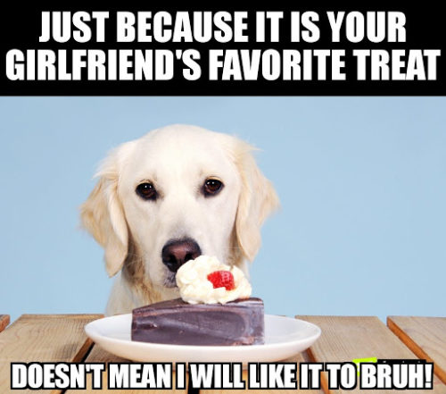 When should I give my dog a treat