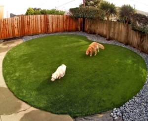 Tips to Avoid Urine Retention in Artificial Grass