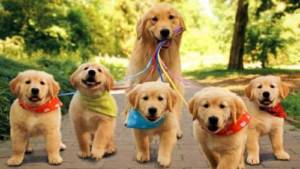 What Factors Affect Breeding in Dogs