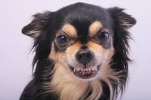Why does my Dog Growl at me at Night