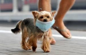 Coronavirus Vaccine in dogs