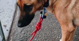 How to make a Dog Leash out of Climbing Rope