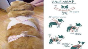 How to Swaddle a Dog