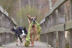 Increase walks and playtime of your dog