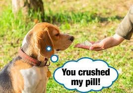 change the form of dog pill