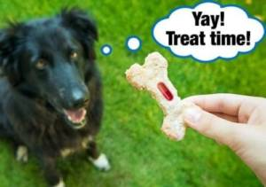 Mix the pills in your dog's treat