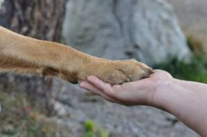 what does it mean when a dog puts his paw on you all the time