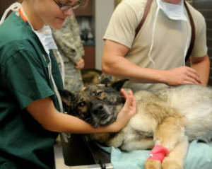 General Anaesthesia for Dogs