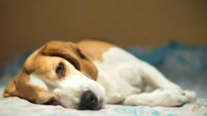 What age should your dog be spayed