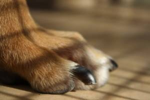 How do I prevent my dog from developing a fear of nail trimming
