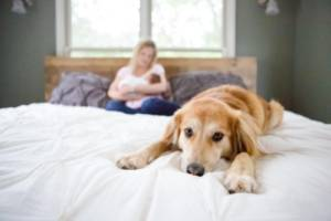 How long does it take for a dog to get used to a new owner