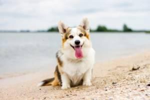 Can Dogs Eat Shrimp Shells