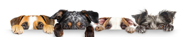 Doggy Talent – Everything about Dog Behaviour